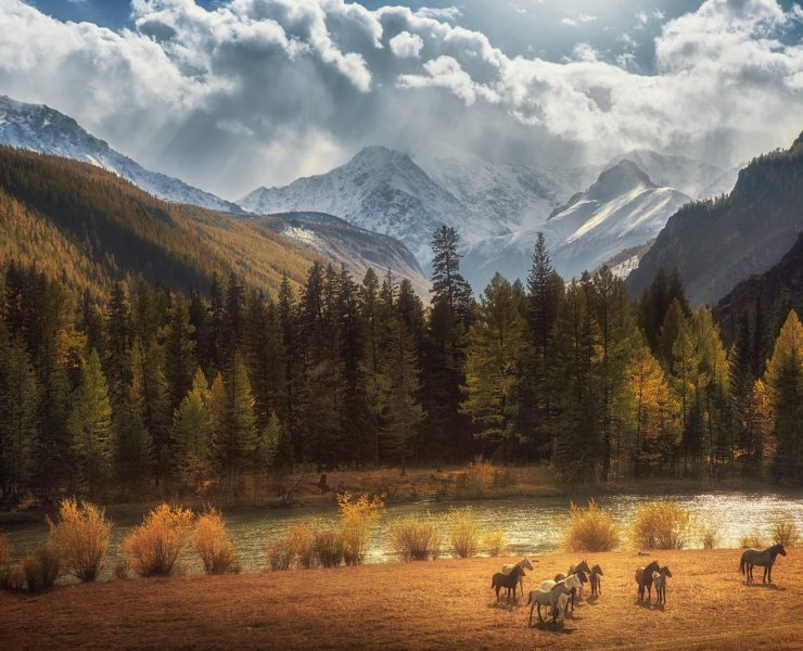 Wildlife Amerika
